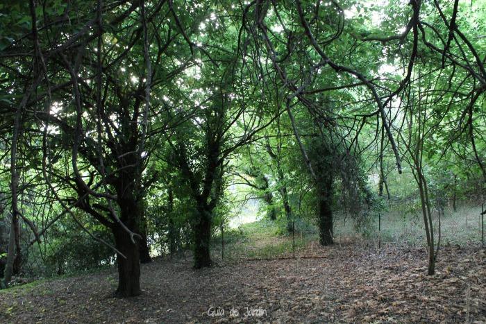 Terrazas superiores llenas de árboles