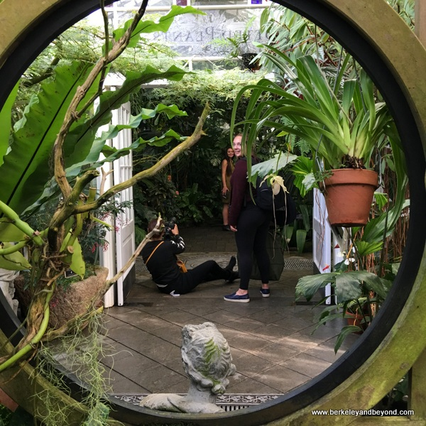 fashion photo shoot in Conservatory of Flowers in San Francisco, California