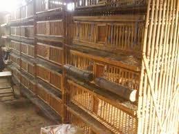 diebuechertante: Contoh Kandang Ayam Petelur