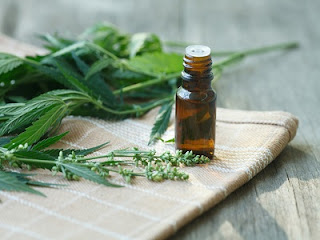 KNOW ABOUT BENEFITS OF CANNABIS OIL, LETSUPDATE