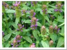 Jammu and Kashmir Medicinal Plants Introduction Centre: Self