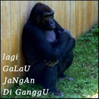 Monyet Patah Hati Kata-Kata Galau...