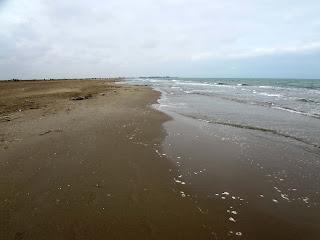 Playa de los Eucaliptus; Delta del Ebro; Delta de l'Ebre; Tarragona; Terres de l'Ebre; Catalunya; Cataluña; Catalonia; Catalogne