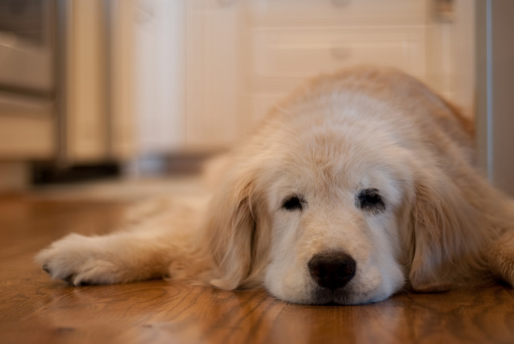 Pets Behaving Badly: Solutions with Dr Kate: When your dog