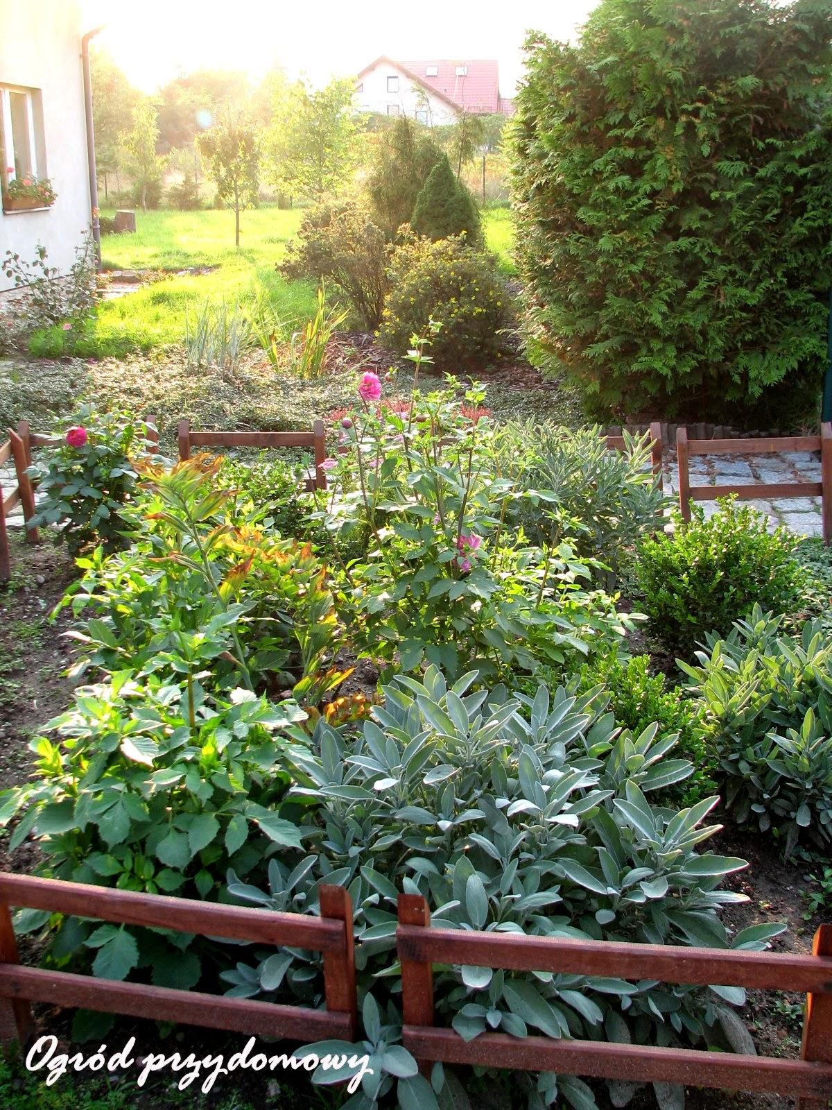 zbieranie jabłek, zbiór jabłek, rabataprzed domem, ogród przydomowy