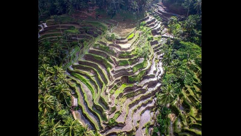 Panorama sawah Ceking Terrace di Ubud Bali
