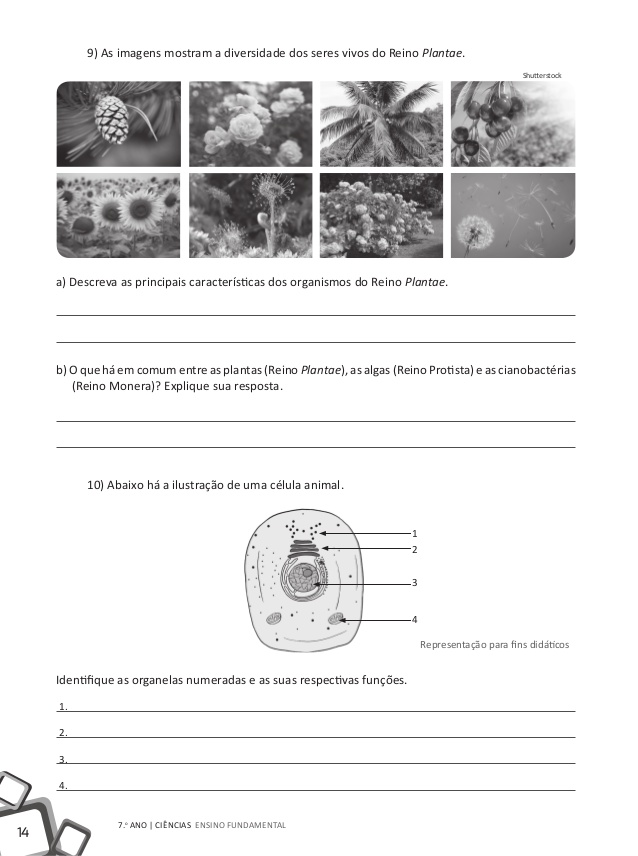 Exercícios Sobre Biologia Evolutiva e Diversidade da Vida