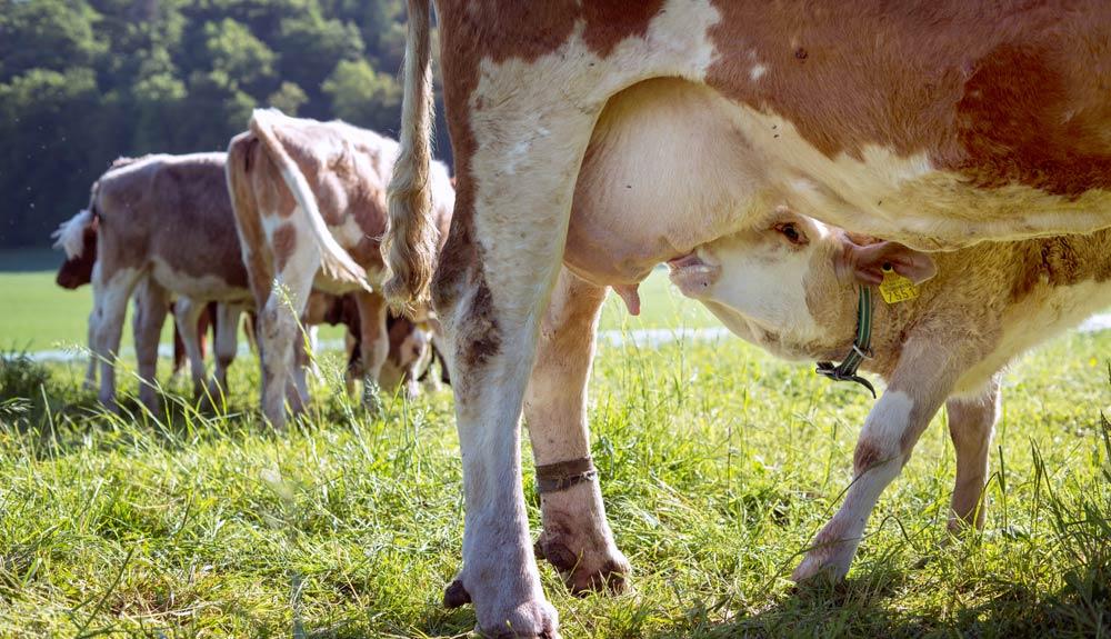Karin Nowack von Bio Suisse: «Eine artgerechte Tierhaltung und Fütterung hat ihren Preis»