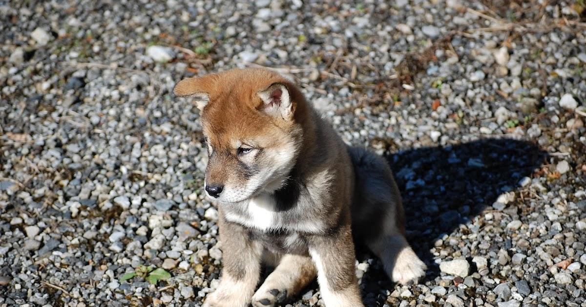 Japanese Dog Names: Japanese Names That Start With J