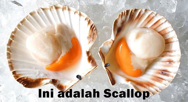 Mengenal Apa itu Scallop dan Manfaatnya