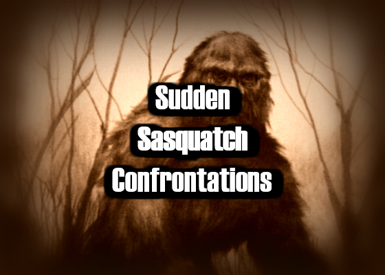 Sudden Sasquatch Confrontations