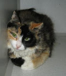 DOGS, CATS, KITTENS OUT OF TIME. Many at shelter due to Irresponsible Owners. JASPAR CTY INDIANA