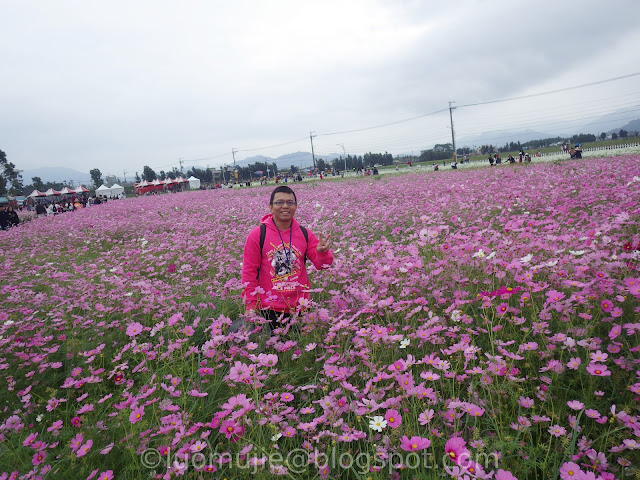 Xinshe Sea of Flowers