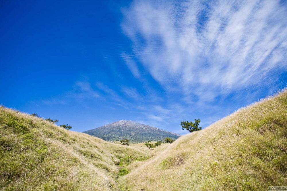 The Savanah grass tall at Sembalun Lawang - Mount Rinjani