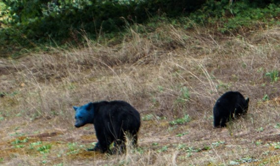 Akhir Zaman, Anehnya beruang berkepala biru, Lumba-lumba pink hingga babi hutan berwarna neon