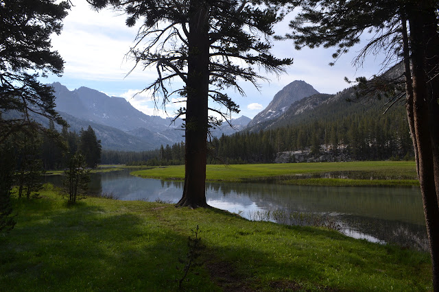 McClure Meadow is a vastness of green