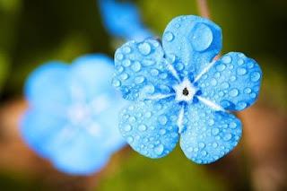 Puisi Cinta Jalan, Rapuh dan Hujan Karya Riris