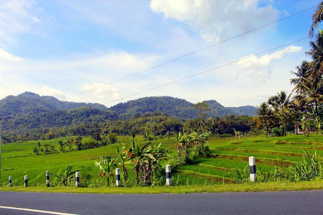 Keindahan Persawahan Watumurah, Pendoworejo, Girimulyo Kulon Progo