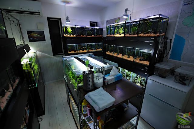 my fish room