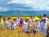 <b>Bupati Bima Panen Raya Padi di Tolonggeru Monggo</b>