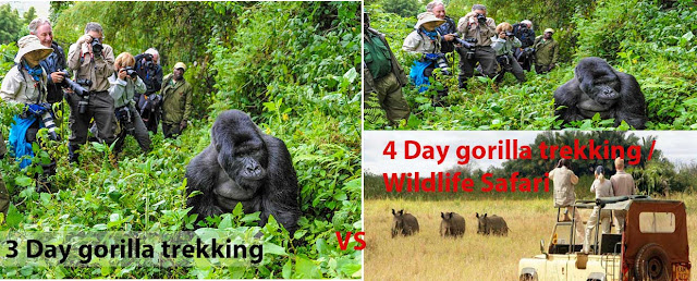 Comparison between a 3 day gorilla trekking  and a 4-day gorilla trekking safari.