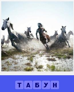 на поле бежит табун лошадей, поднимая пыль из под копыт