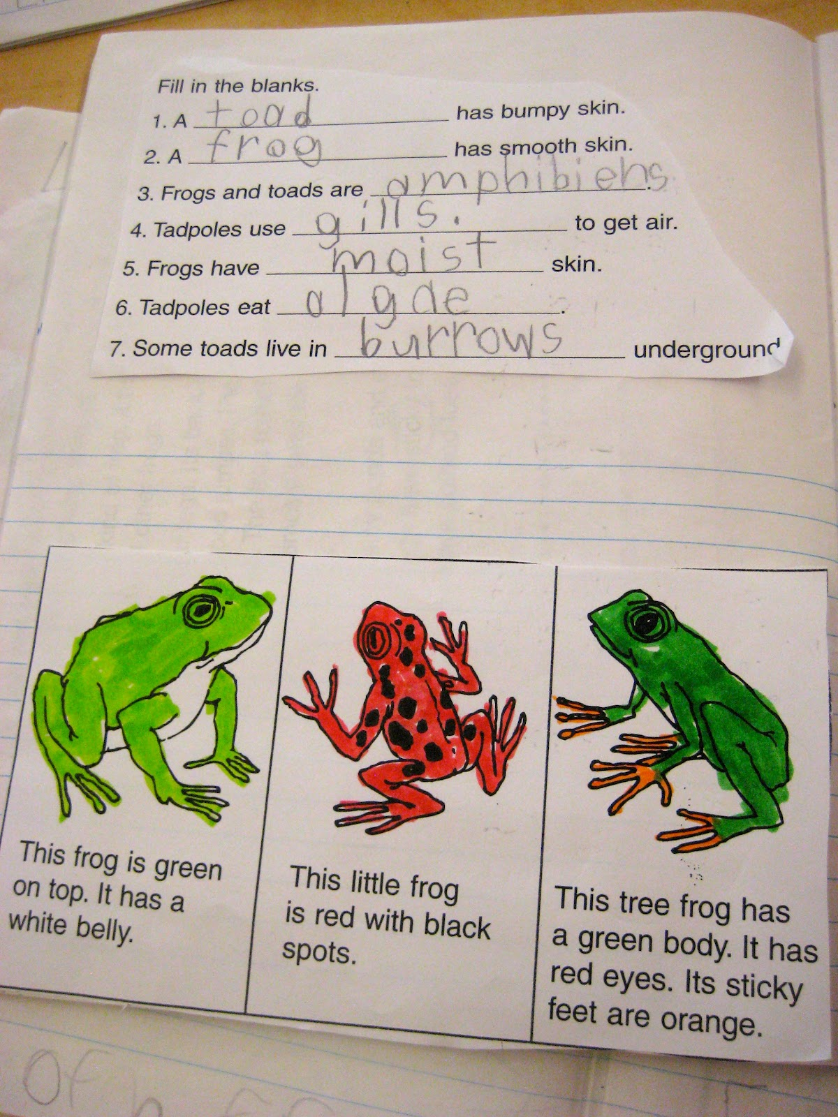Frog And Toad Venn Diagram Rockford Fosgate P3 Wiring Ms Liebel 39s Classroom Science Journal Unit
