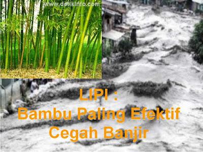 Penelitian LIPI : Bambu Efektif Cegah Banjir Bandang