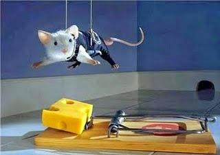 Como matar ratos com ratoeiras
