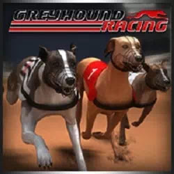 Tazı Yarışı - Greyhound Racing