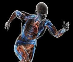 Body Metabolism