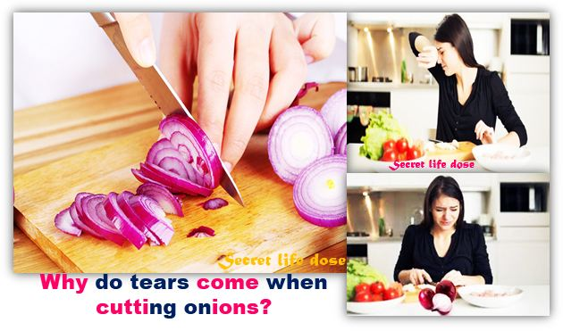 why tears come while cutting onions? | secret life dose