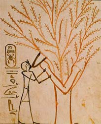image: ancient Egypt tree of life