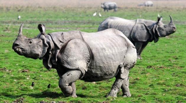 Image result for Kaziranga National Park, Assam