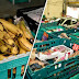 Ευρώπη των φτωχών και εξαθλιωμένων, Σούπερ Μάρκετ με ληγμένα τρόφιμα!