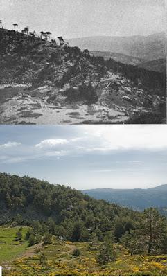 Morrenas glaciar Pepe Hernando.