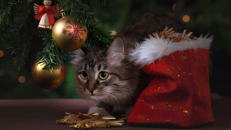 Kitty Cat and Christmas Decorations HD