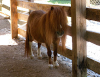 Adorable animals at the petting zoo in Pigeon Forge