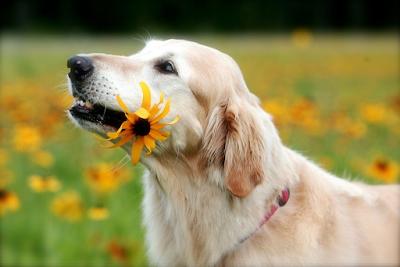 Sağlıklı Köpek Besleme