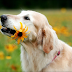 Köpek Beslemede 10 Altın Kural