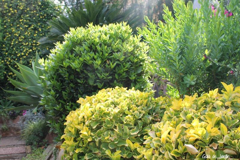 Recoger y secar laurel del jard n guia de jardin - Laurel de jardin ...