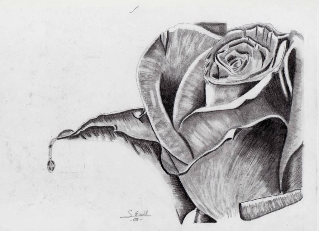 Imagenes A Lapiz De Rosas