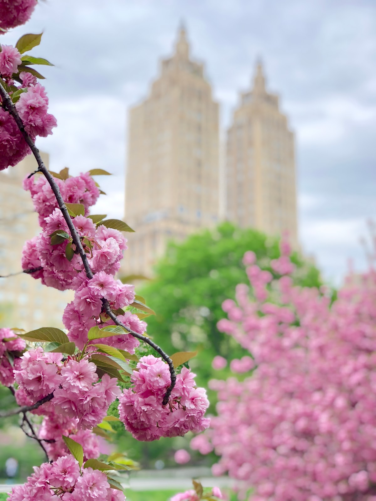 Flowers in Central Park, Spring 2018, New York City, Photos by Jessica Marie Kelley