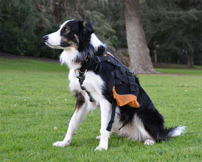 Dog hiking pack