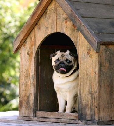 5 Great Tips On Building A Dog House