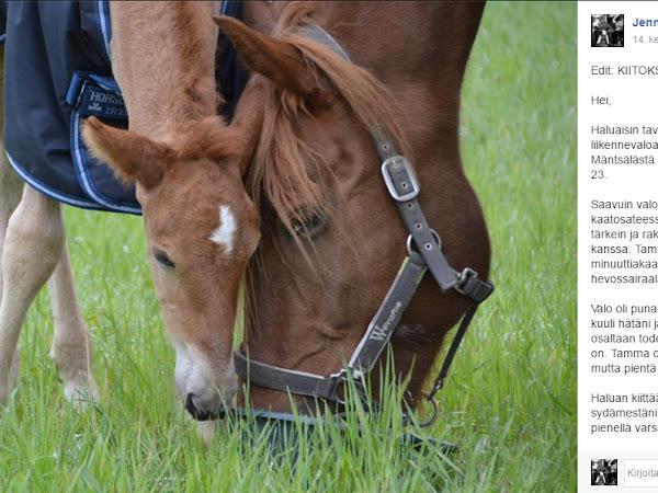 Hevosen hepatiitti