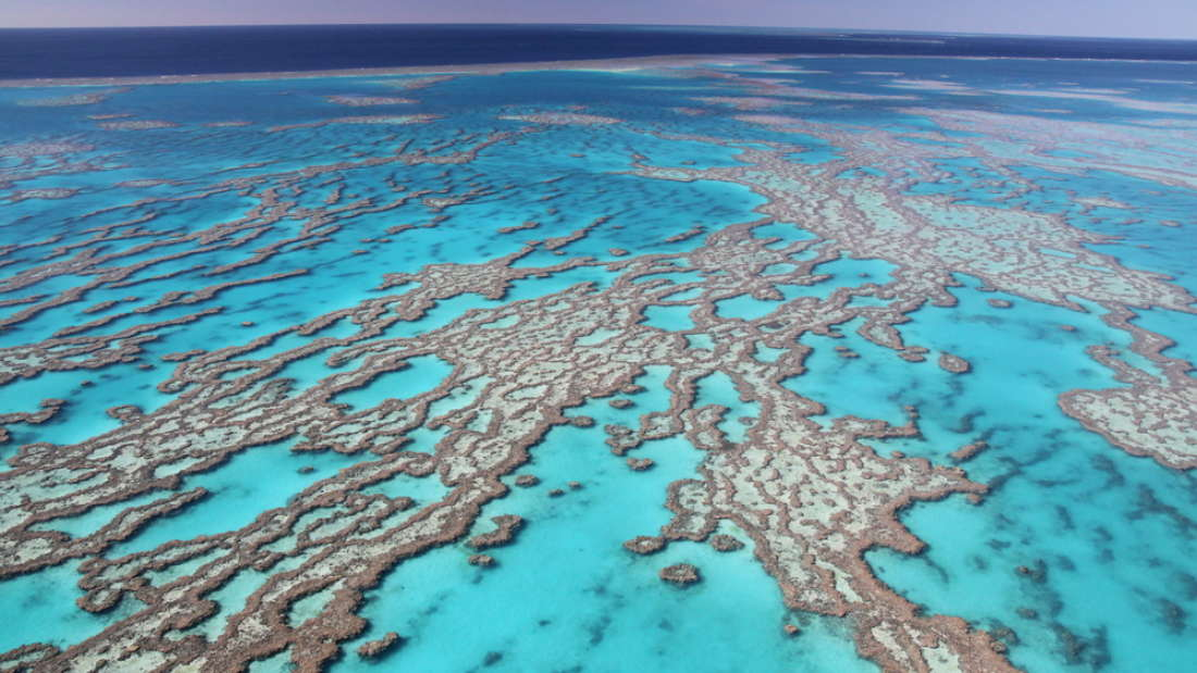 There Is A 'Positive Update' On The Great Barrier Reef According To A New Report