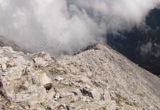 W dole ponad doliną Byndericy kluczy stado ptaków.
