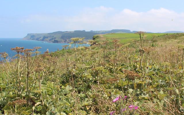 Verdes praderas que llegan hasta el mar. Mar Cantábrico. Acantilados en Ribamontán al Mar. Cantabria