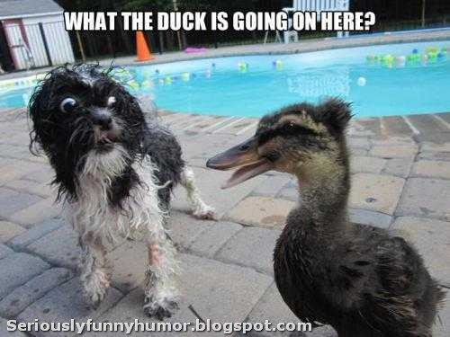 dog-surprised-what-the-duck-is-going-on-here